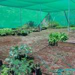 Shade Structure for Growing Vegetables