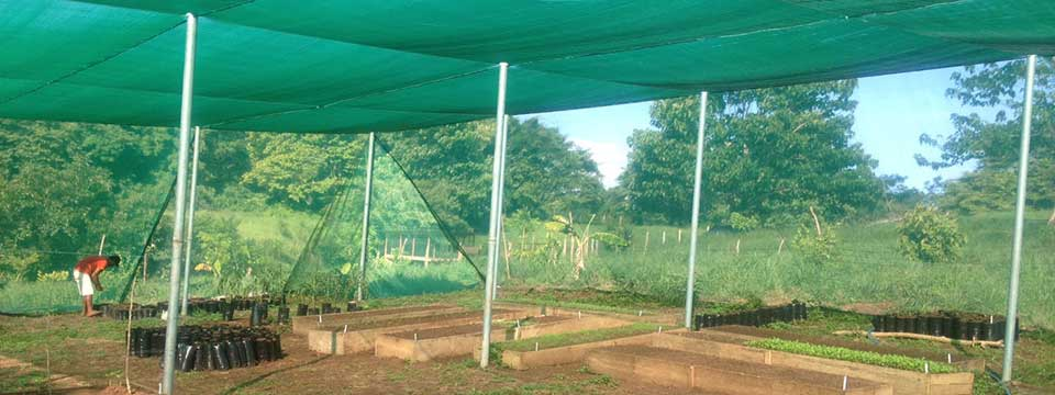 Shad Structure for Vegetables
