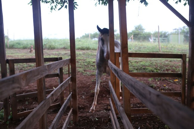 Baby Horse Wants to Play