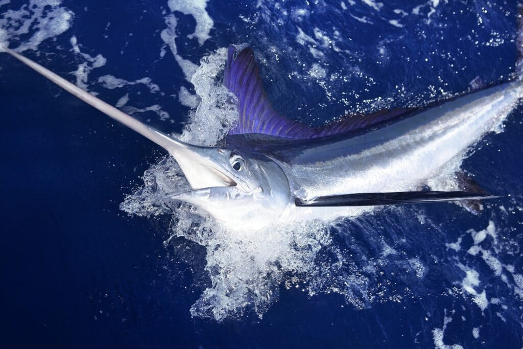 year-round fishing in Los Cabos