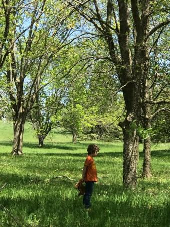 Part of the Arboretum at Lake Maskenthine