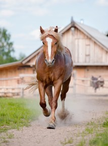 horse leaving farm