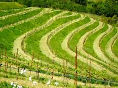 Benzinger Family Winery, Glen Ellen, CA