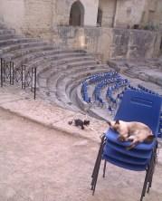 38-Lecce gatti teatro romano1