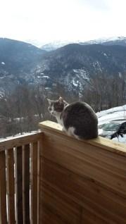 ... tandis qu'Opale fait l'équilibriste sur notre terrasse