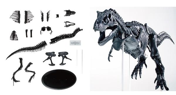 『科学と学習PRESENTS ティラノサウルス1/35骨格模型キット&本物の大きさ特大ポスター』