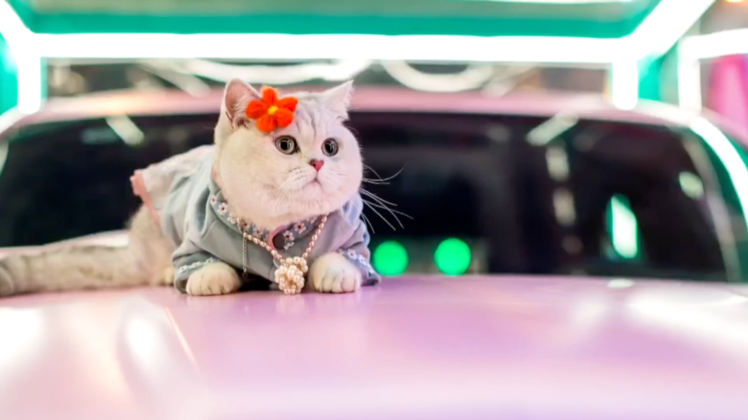 Mao Mao, the feline car model that earns more than most humans