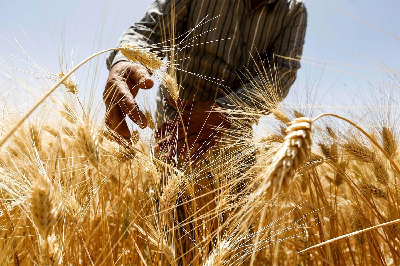 The Spirit of the Grain Fields