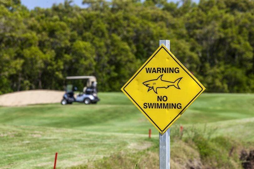 Meet the Bull Sharks of Carbrook Golf Course!