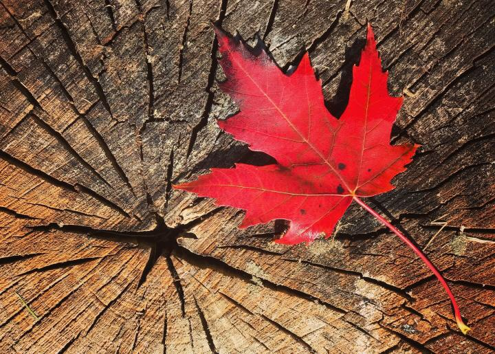Second Monday of October – Canadian Thanksgiving