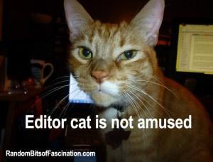 editor cat is not amused