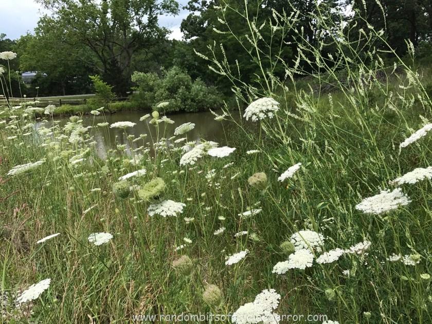 wildflower_002
