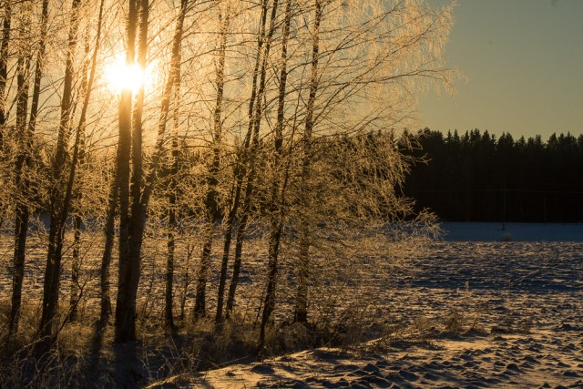 Low-lying winter sun