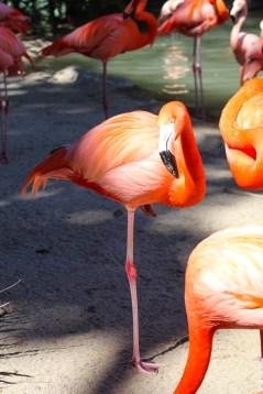 Rys Fav, the PINK flamingo.