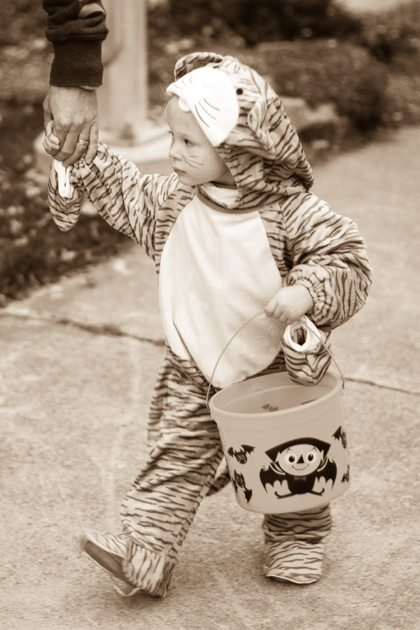 This cat is going trick or treating. Game Face.