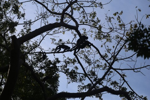Howler monkeys in the trees above our bungalow hut. So cool.