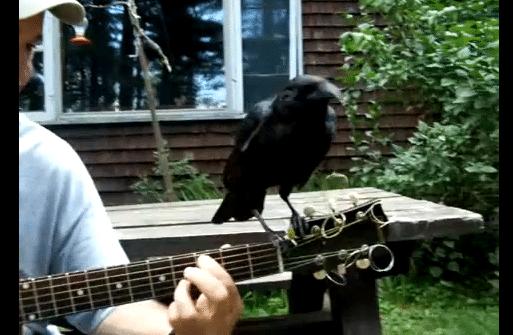 Um escritor toca Blackbird quando um convidado especial aparece