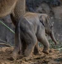 13-17-18-elephant18-1