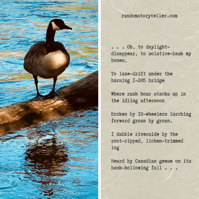 Poem excerpt from Chattahoochee Song #2 by randomstoryteller chamrick writer with image of Canadian goose on log