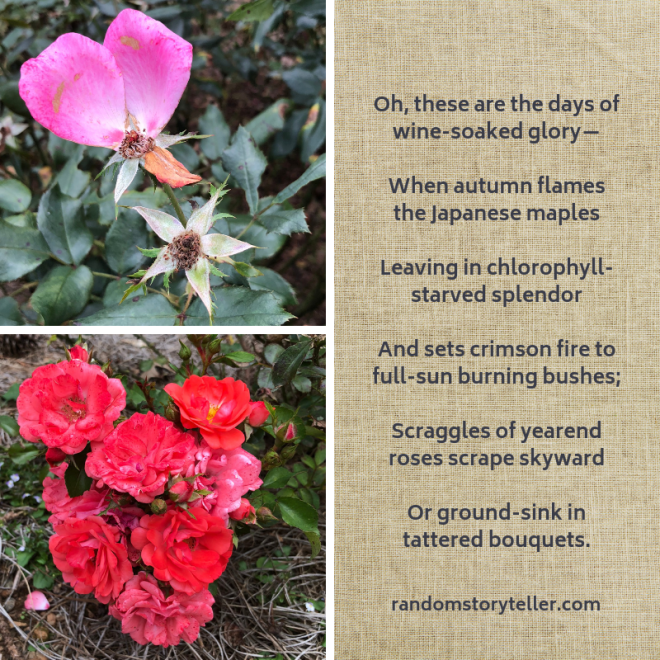 Excerpt_poem_Saturday Martini_chamrickwriter_randomstoryteller_with images of roses at Gibbs Gardens