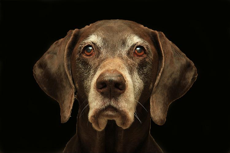 old+dog