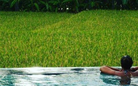 Alojamiento en Bali (Indonesia): Dónde dormir en Ubud y en Kuta