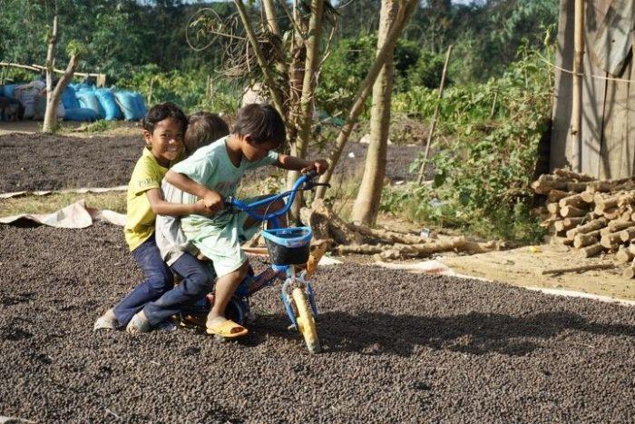 Niños jugando con la bici por encima de los granos de café que secan al sol