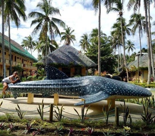 Esto fue lo más cerca que hemos estado del tiburón ballena :(