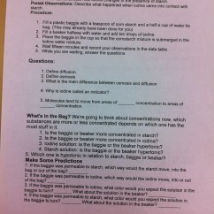 Dna Replication Diagram Worksheet Spanish Inquisition Venn Rudy's Work - Rudy And Perez Biology