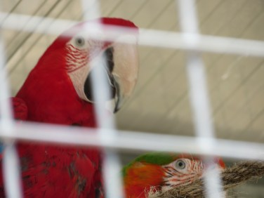 Parrot number two.