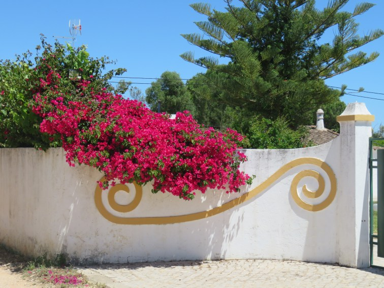 The bougainvillea is still blooming and providing lovely splashes of colour......not to mention the lovely design on the fence.