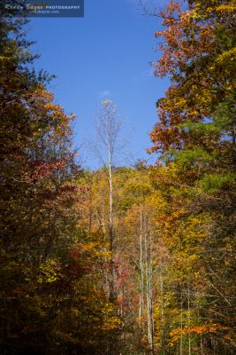 Fall color - standing alone