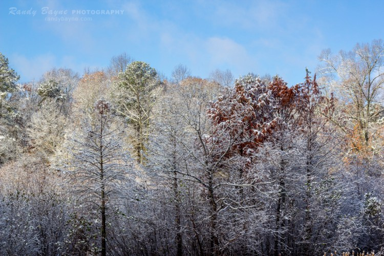 A dusting of snow in the tree tops.