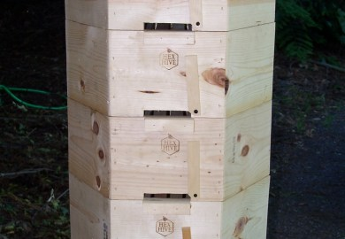 Wild Bee Hives For Sale