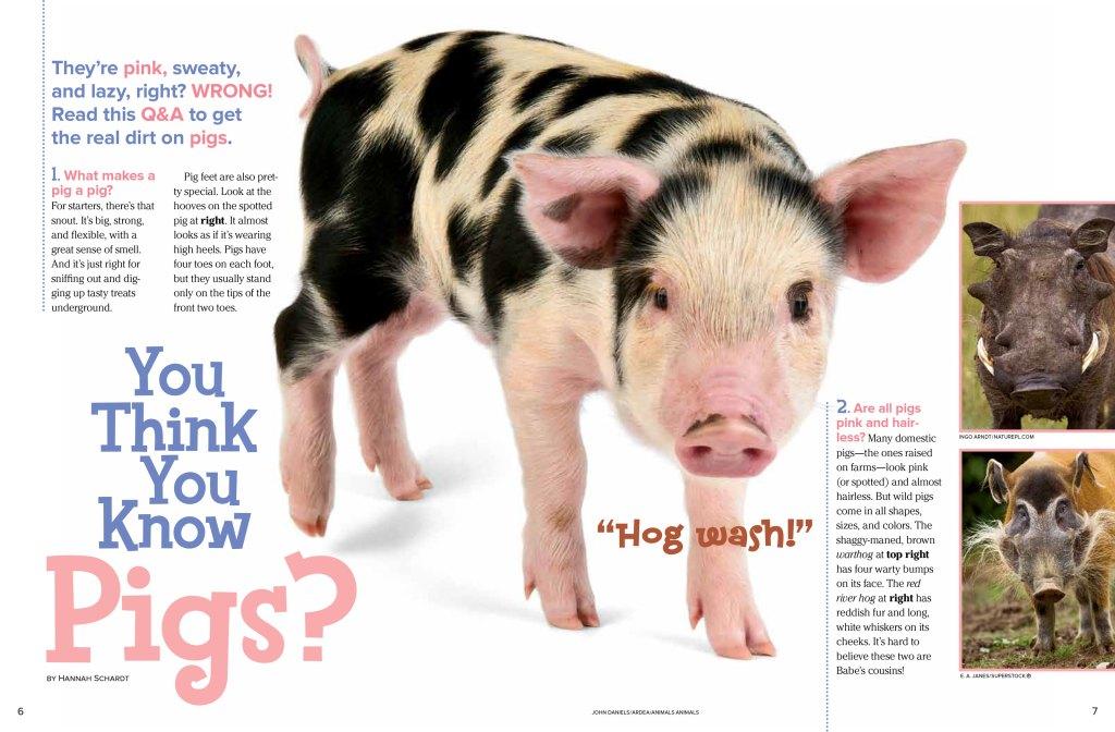 pigs-nov2012-page1