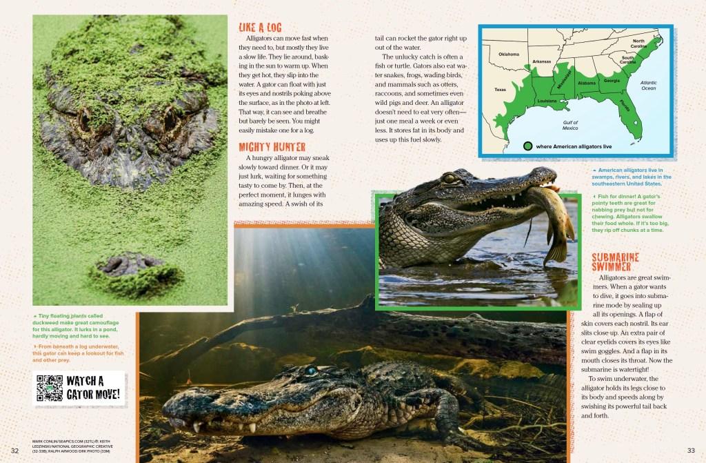 Alligators Ranger Rick September 2017 2