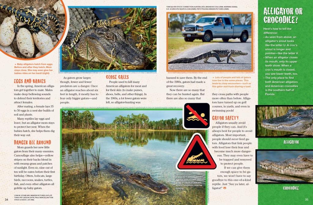 Alligators Ranger Rick September 2017 3
