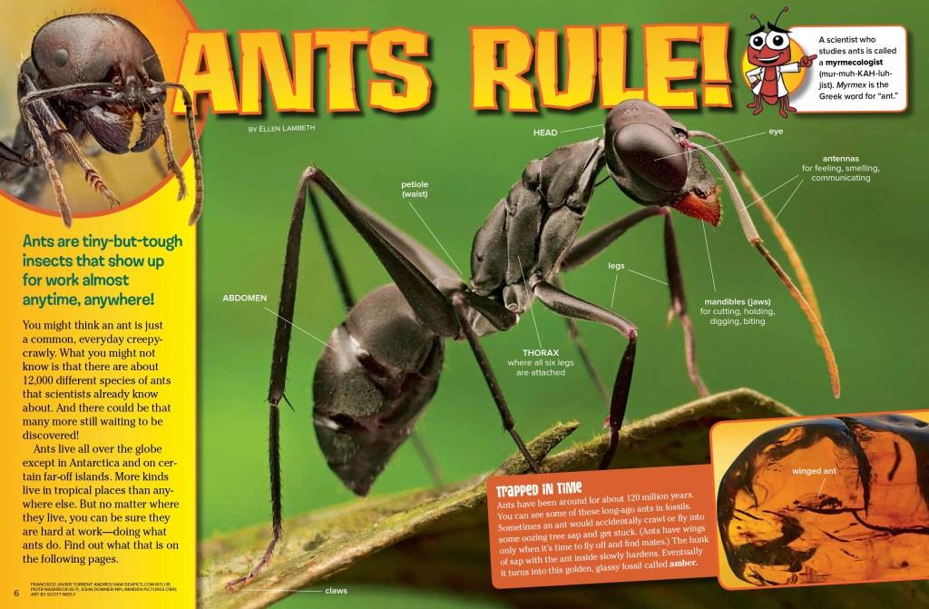 Ants Ranger Rick May 2017 1