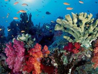 Coral Reef Ranger Rick Jr June/July 2017