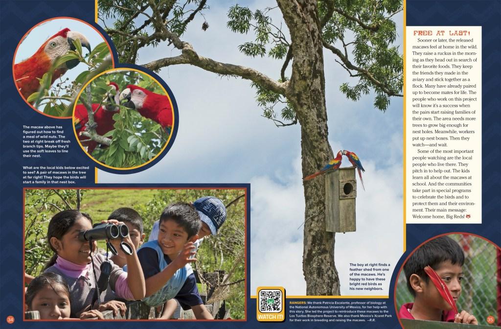 Macaw Ranger Rick February 2018 3