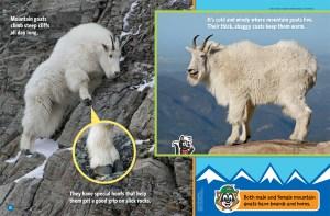 Mountain Goats Ranger Rick Jr May 2017 2