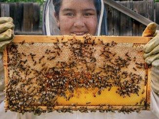 Queen Bee Ranger Rick June July 2017