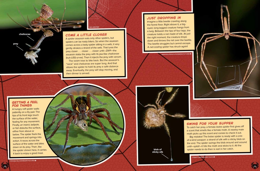 Weird Spiders Ranger Rick August 2017 2