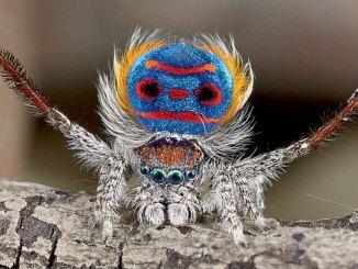 Weird Spiders Ranger Rick August 2017