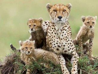 animal families dec/jan 2018