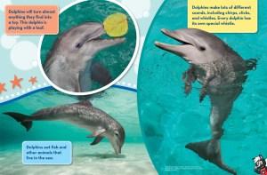 Dolphins Ranger Rick Jr June July 2016 3