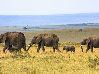 elephants november 2017