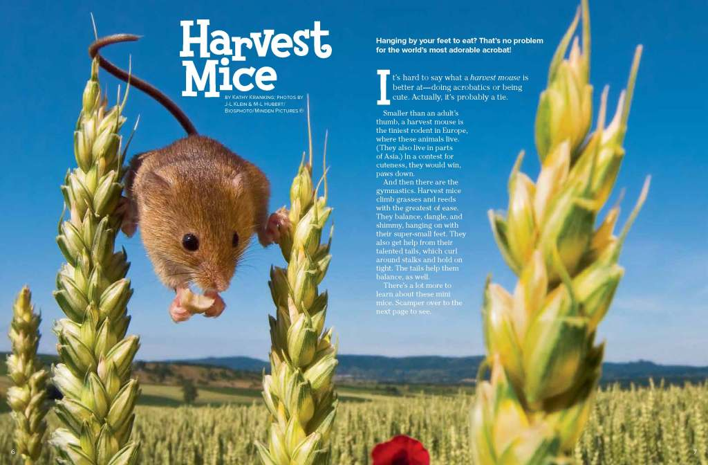 Ranger Rick Harvest Mice April 2014 1