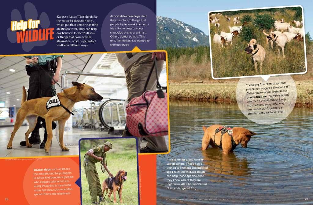 Ranger Rick Dogs on Duty August 2014 2