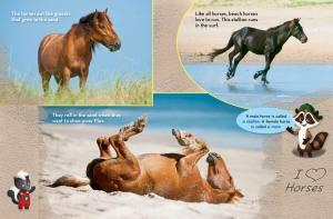 Ranger Rick Jr Beach Horses May 2014 2